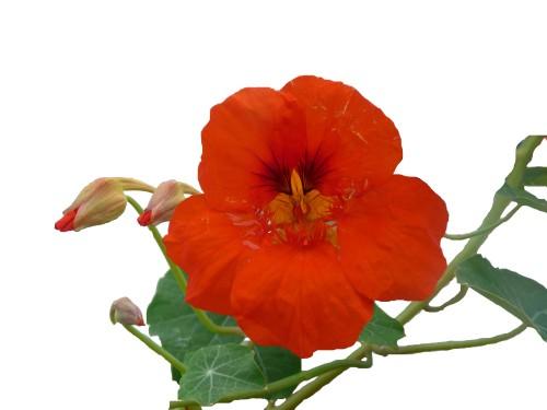 florara2